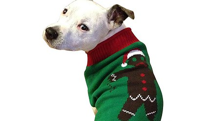 Christmas Sweaters For Dogs.14 Adorable Ugly Christmas Sweaters For Dogs